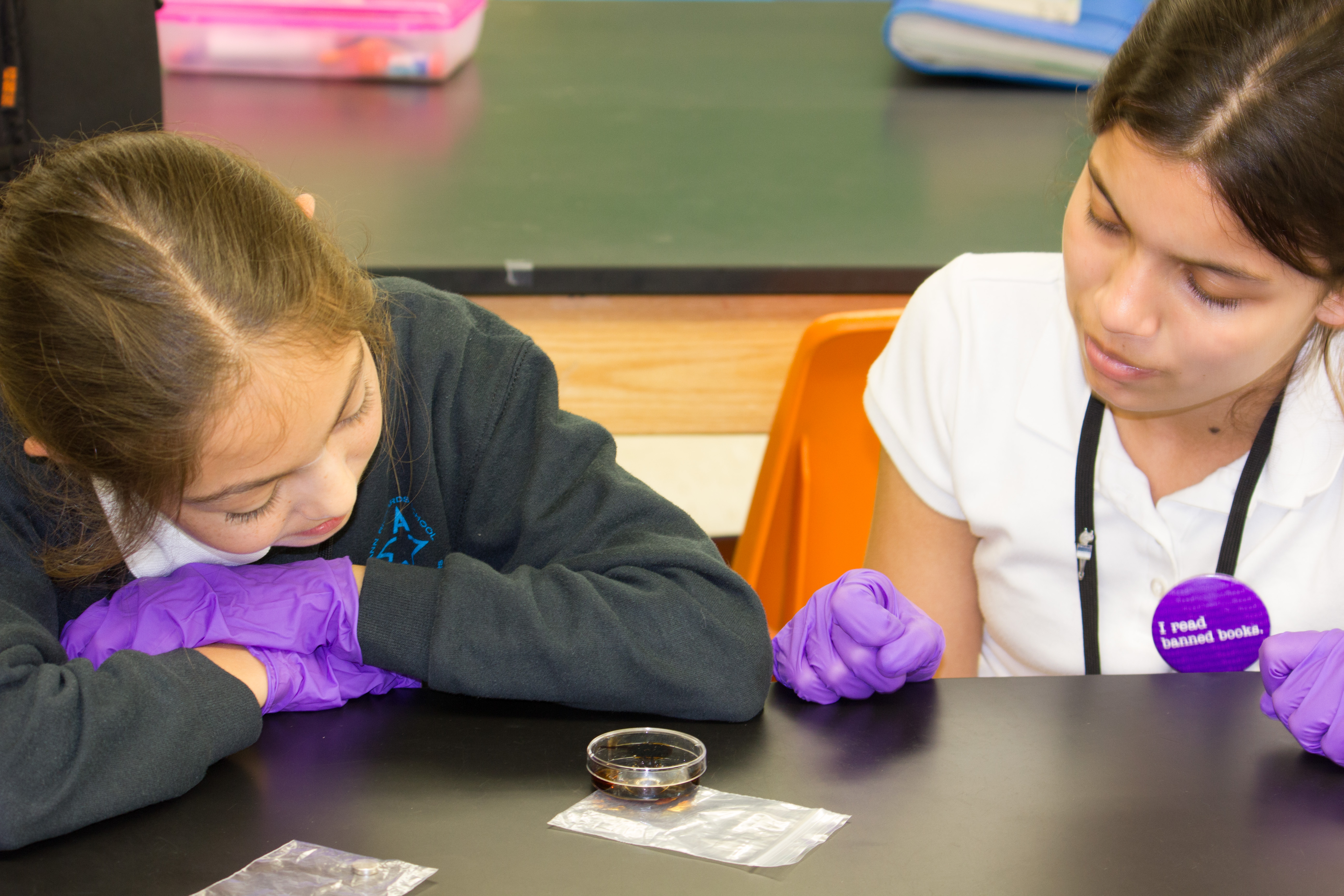 Two female middle school students are sitting at a table contemplating a science experiment they are conducting. The science experiment sits in a petri dish in front of them and they are wearing purple latex gloves.